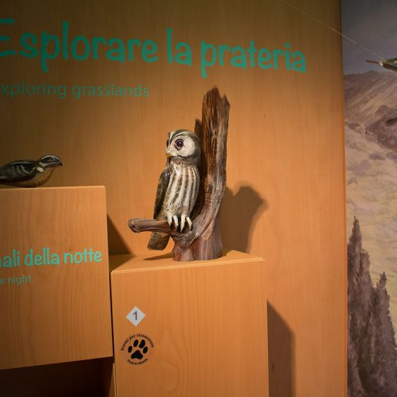 Centro visite Alpe della Luna - Badia Tedalda (5)