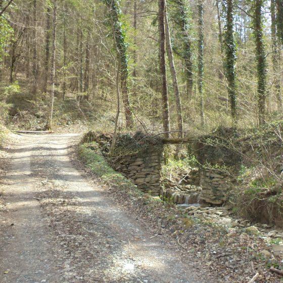 Alpe della Luna - strada forestale