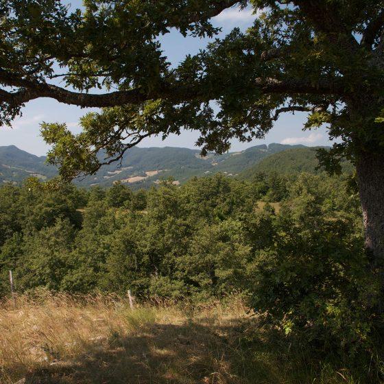 Alta Valmarecchia - panorama (6)
